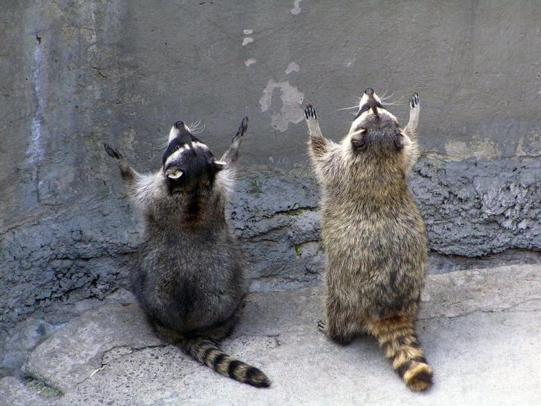 Животные молятся