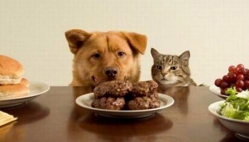 Сила воли - кот и собака смотрят на стол с едой
